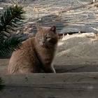 Cat found orange tabby gifford spring k noble house